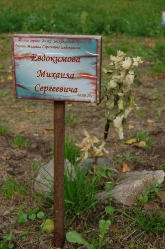 Именное дерево внука Михаила Евдокимова